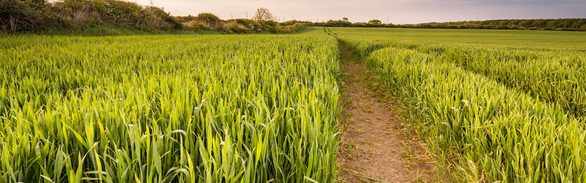 Over 3,000 acres of arable land